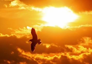 seagull marco island (2)