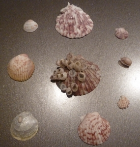 seashells final